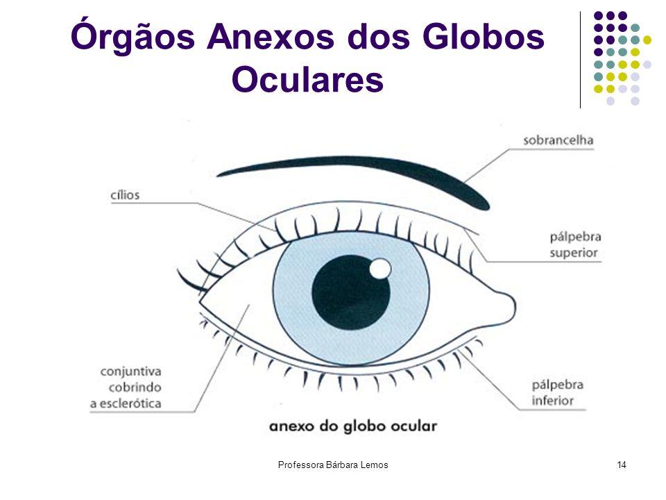 Professora Bárbara Lemos14 Órgãos Anexos dos Globos Oculares