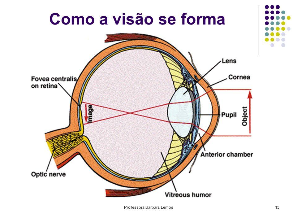Professora Bárbara Lemos15 Como a visão se forma