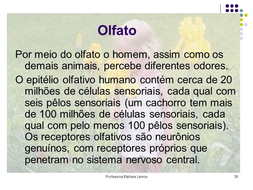 Professora Bárbara Lemos38 Olfato Por meio do olfato o homem, assim como os demais animais, percebe diferentes odores. O epitélio olfativo humano cont