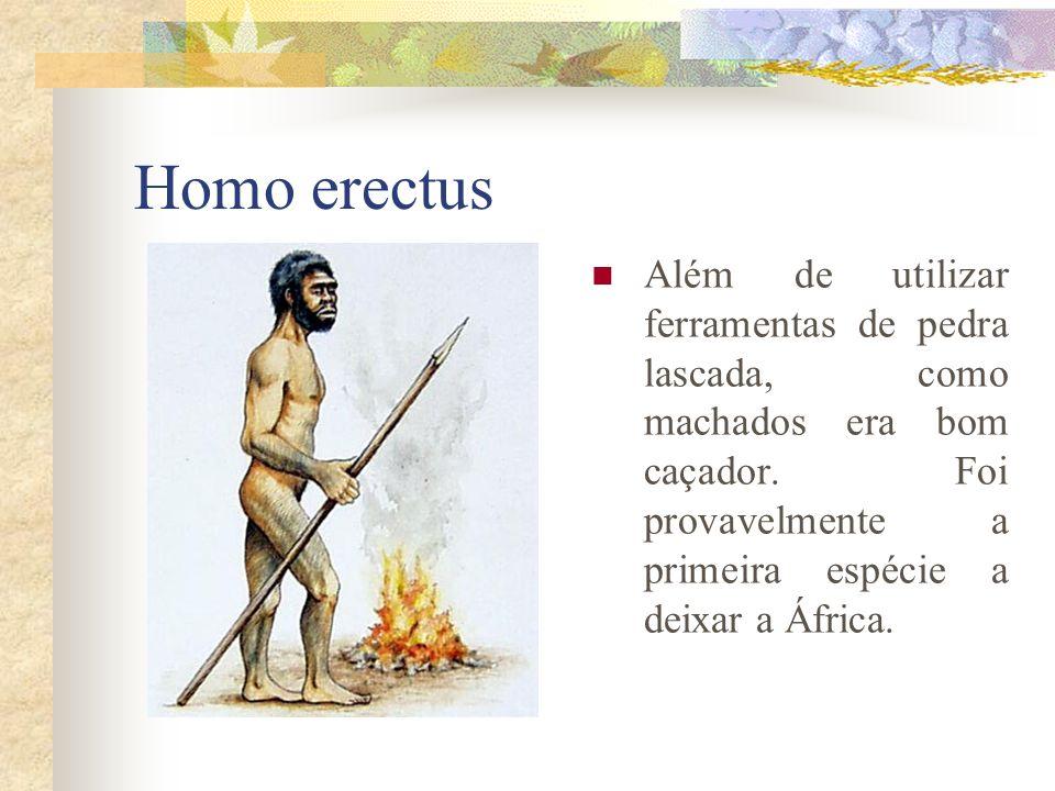 Homo erectus Além de utilizar ferramentas de pedra lascada, como machados era bom caçador. Foi provavelmente a primeira espécie a deixar a África.