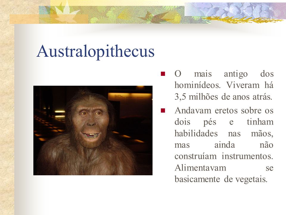 Australopithecus O mais antigo dos hominídeos. Viveram há 3,5 milhões de anos atrás. Andavam eretos sobre os dois pés e tinham habilidades nas mãos, m