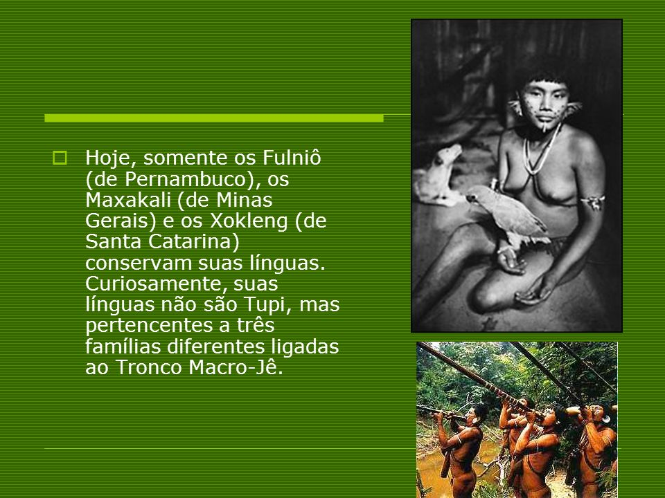 Hoje, somente os Fulniô (de Pernambuco), os Maxakali (de Minas Gerais) e os Xokleng (de Santa Catarina) conservam suas línguas. Curiosamente, suas lín
