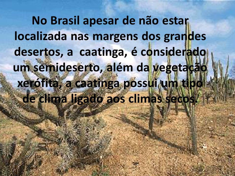 No Brasil apesar de não estar localizada nas margens dos grandes desertos, a caatinga, é considerado um semideserto, além da vegetação xerófita, a caa