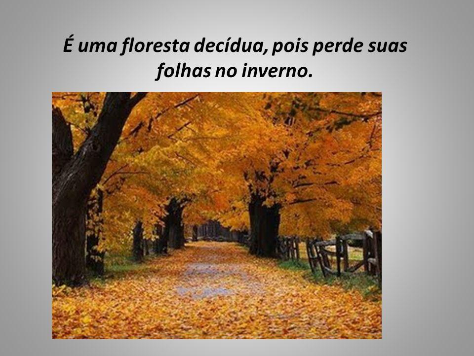 É uma floresta decídua, pois perde suas folhas no inverno.