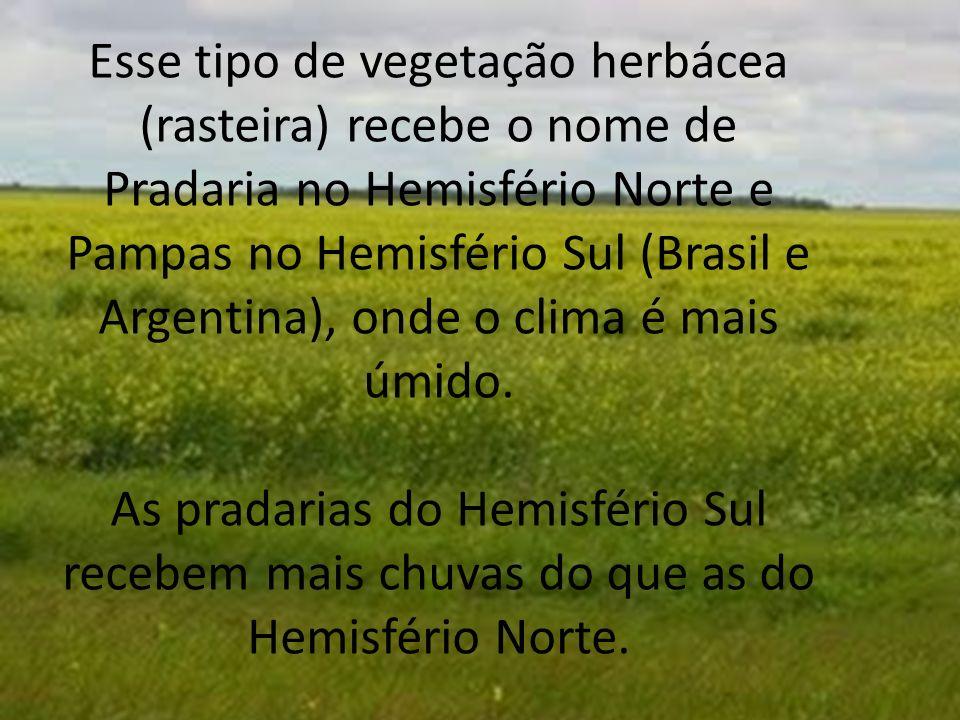 Esse tipo de vegetação herbácea (rasteira) recebe o nome de Pradaria no Hemisfério Norte e Pampas no Hemisfério Sul (Brasil e Argentina), onde o clima