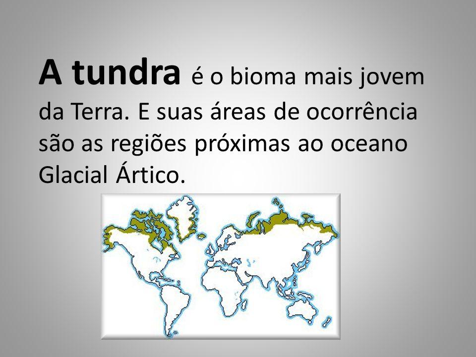 A tundra é o bioma mais jovem da Terra. E suas áreas de ocorrência são as regiões próximas ao oceano Glacial Ártico.