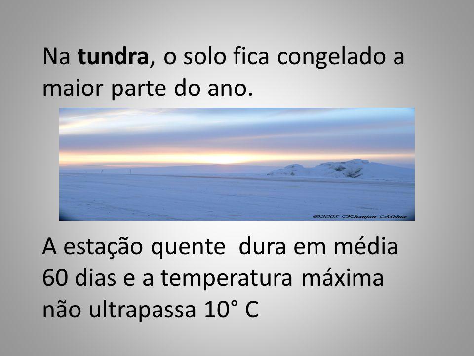 Na tundra, o solo fica congelado a maior parte do ano. A estação quente dura em média 60 dias e a temperatura máxima não ultrapassa 10° C