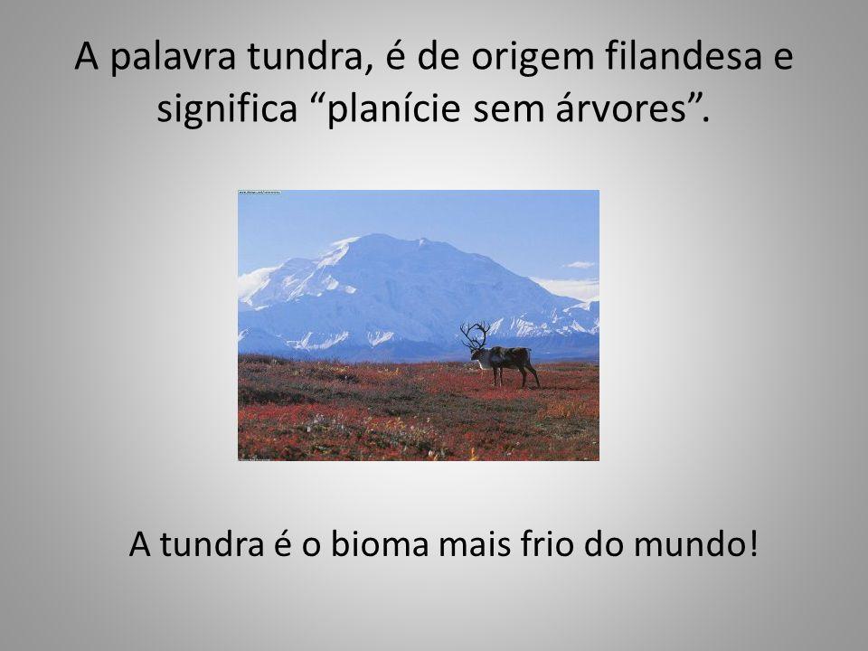 A palavra tundra, é de origem filandesa e significa planície sem árvores. A tundra é o bioma mais frio do mundo!