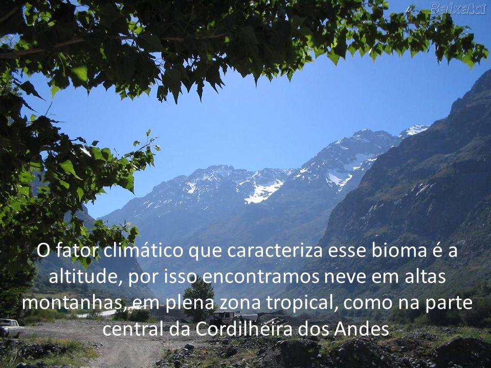 O fator climático que caracteriza esse bioma é a altitude, por isso encontramos neve em altas montanhas, em plena zona tropical, como na parte central