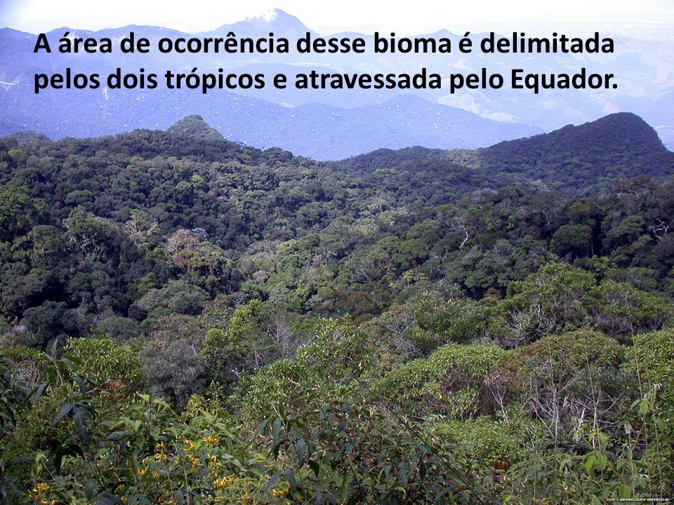 As florestas tropicais tem algumas característica em comum: são heterogeneas perenes, higrófilas, latifoliada.