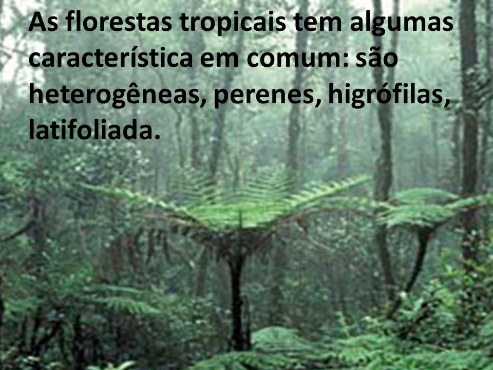 As florestas tropicais tem algumas característica em comum: são heterogeneas perenes, higrófilas, latifoliada. As florestas tropicais tem algumas cara