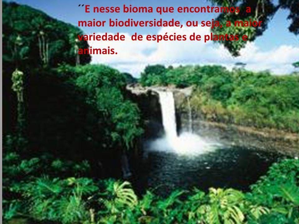 ´´E nesse bioma que encontramos a maior biodiversidade, ou seja, a maior variedade de espécies de plantas e animais.