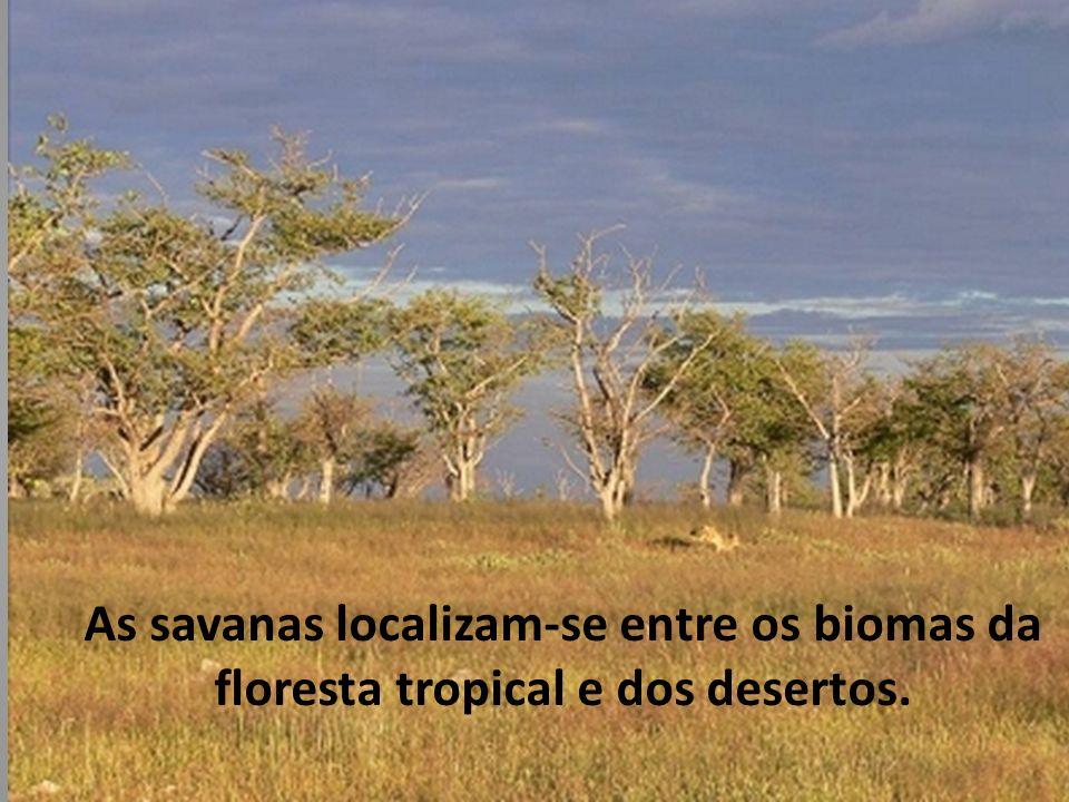 No Brasil apesar de não estar localizada nas margens dos grandes desertos, a caatinga, é considerado um semideserto, além da vegetação xerófita, a caatinga possui um tipo de clima ligado aos climas secos.