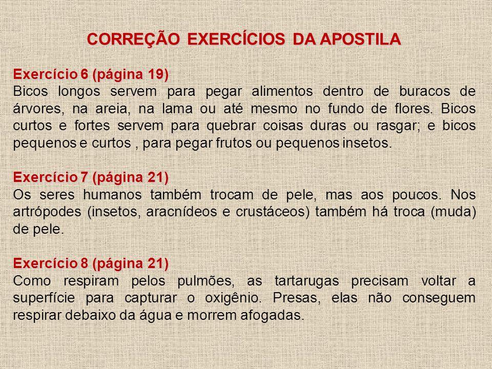 CORREÇÃO EXERCÍCIOS DA APOSTILA Exercício 6 (página 19) Bicos longos servem para pegar alimentos dentro de buracos de árvores, na areia, na lama ou at