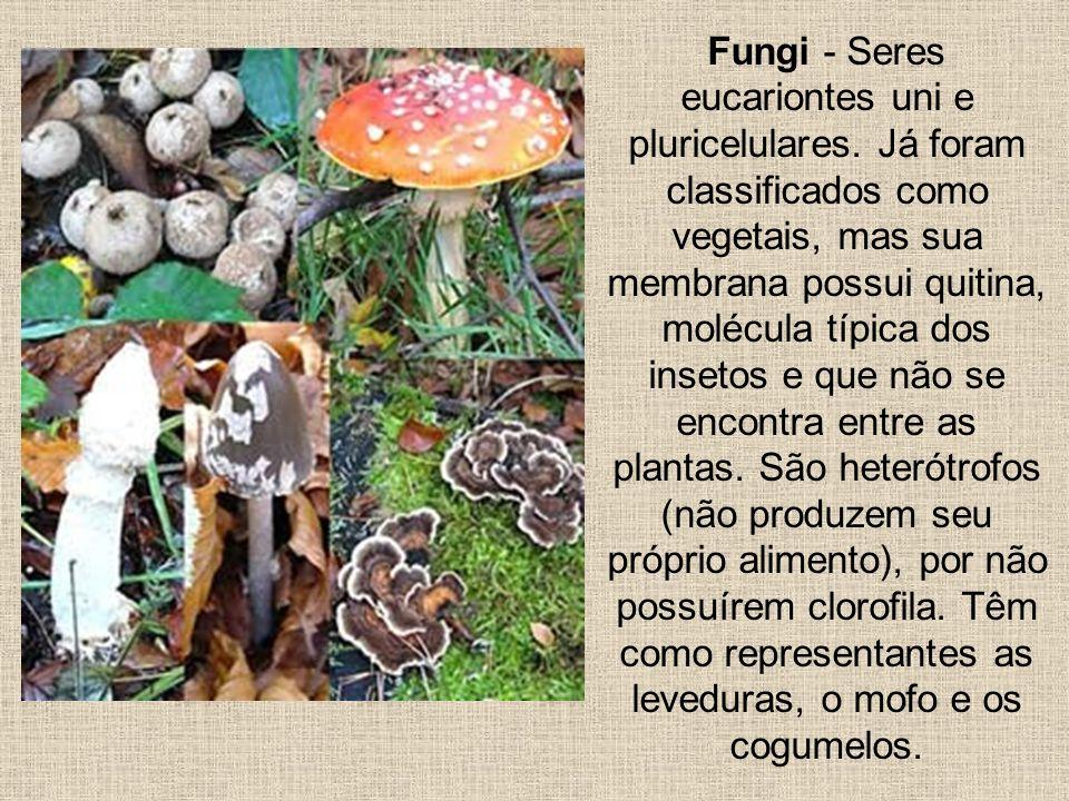 Fungi - Seres eucariontes uni e pluricelulares. Já foram classificados como vegetais, mas sua membrana possui quitina, molécula típica dos insetos e q