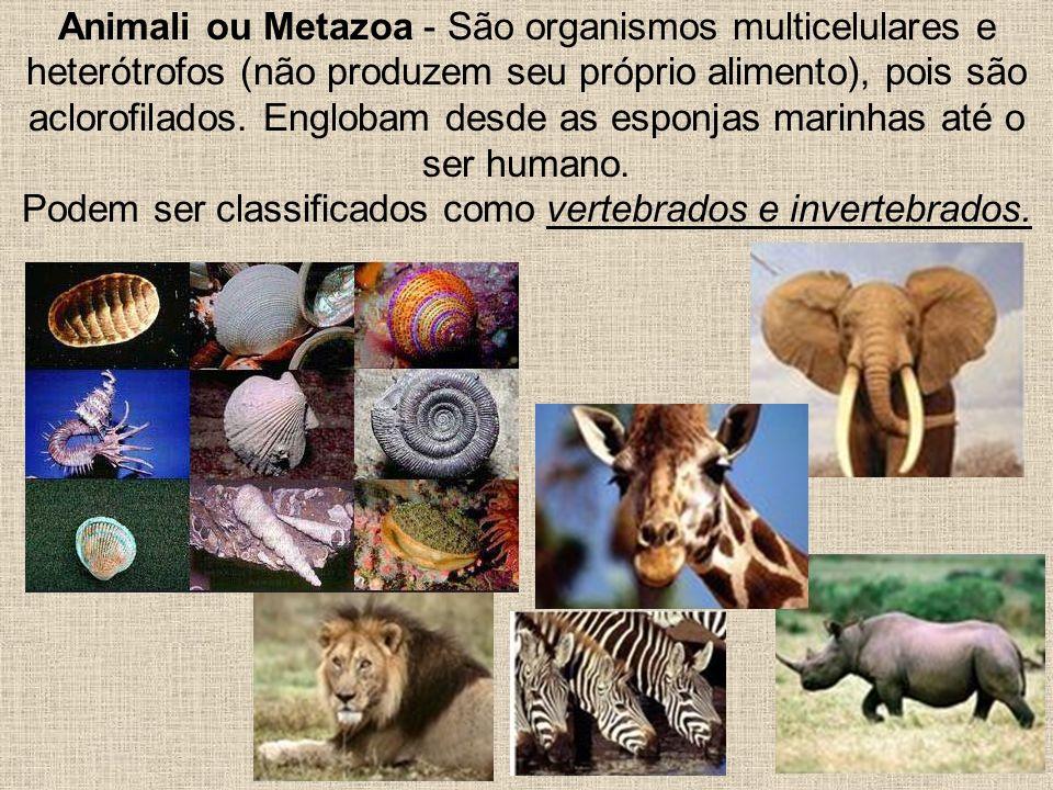 Animali ou Metazoa - São organismos multicelulares e heterótrofos (não produzem seu próprio alimento), pois são aclorofilados. Englobam desde as espon