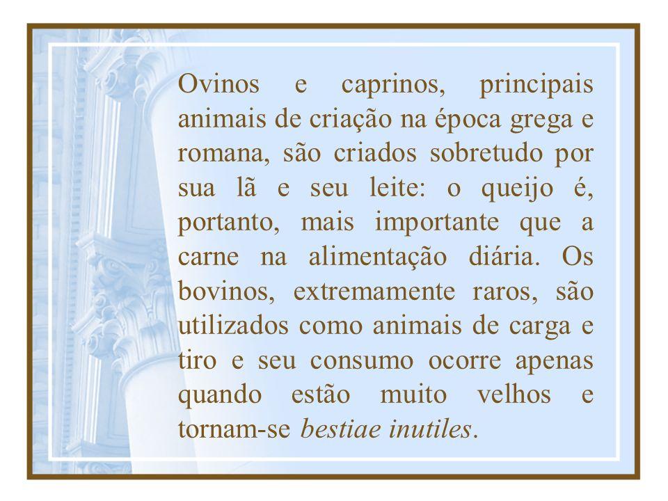 Ovinos e caprinos, principais animais de criação na época grega e romana, são criados sobretudo por sua lã e seu leite: o queijo é, portanto, mais imp