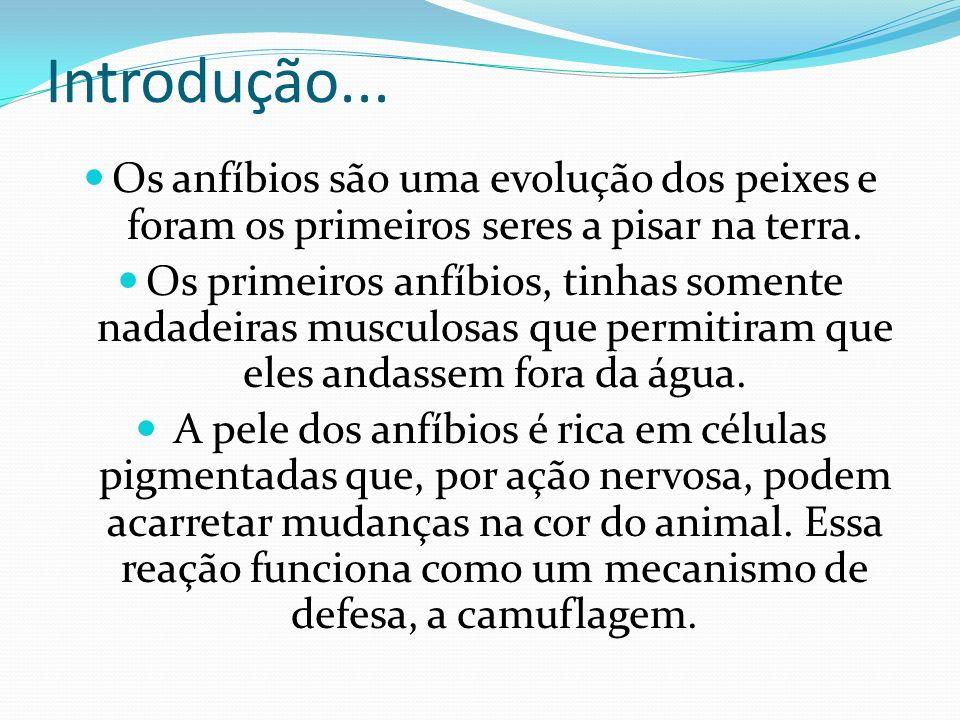 São quase todos carnívoros, com exceção de uma espécie encontrada no Brasil, Xenohyla truncata, que alimenta-se também de frutos.