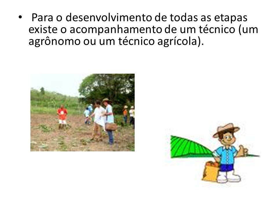 Para o desenvolvimento de todas as etapas existe o acompanhamento de um técnico (um agrônomo ou um técnico agrícola).
