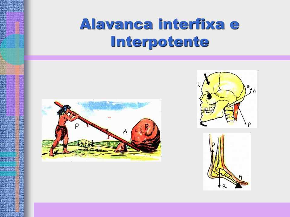 Alavanca interfixa e Interpotente