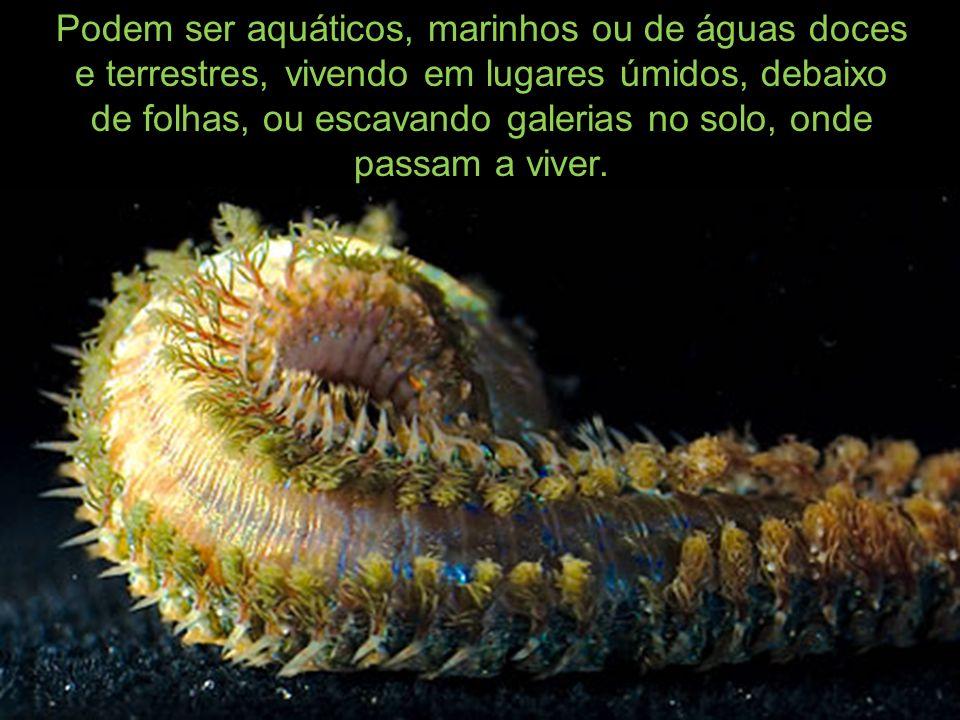 Podem ser aquáticos, marinhos ou de águas doces e terrestres, vivendo em lugares úmidos, debaixo de folhas, ou escavando galerias no solo, onde passam
