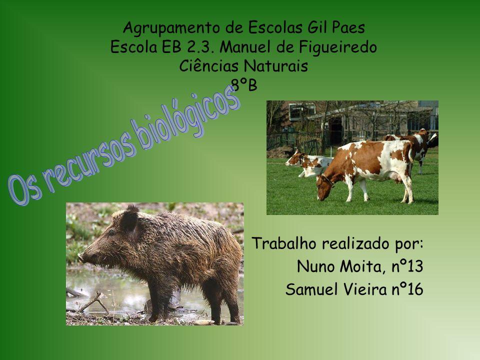 Agrupamento de Escolas Gil Paes Escola EB 2.3.