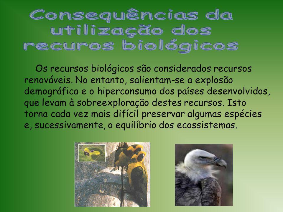 Os recursos florestais englobam uma série de produtos biológicos indispensáveis ao nosso dia-a-dia, salientando-se a sua importância na produção de ma