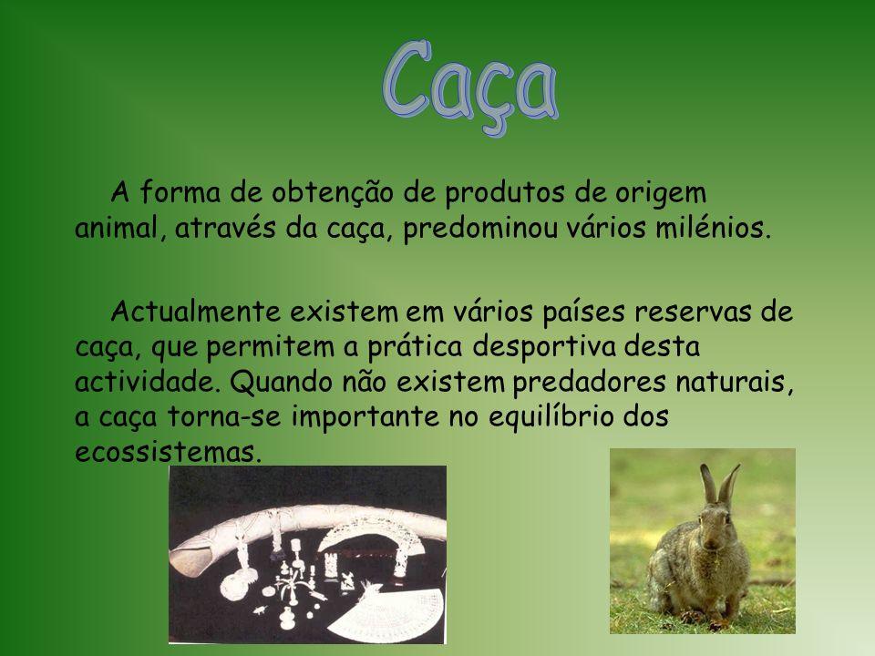 Os animais criados em cativeiro representam, para além de uma fonte de alimento, recursos utilizados na indústria do calçado, do vestuário, farmacêuti