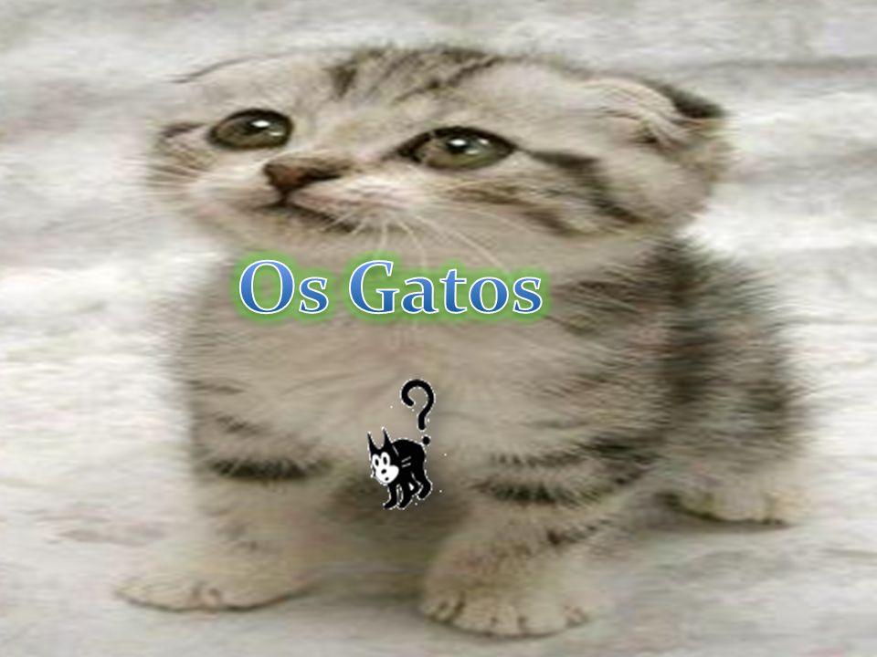 CURIOSIDADES · Gatos possuem 32 músculos que controlam as suas orelhas.