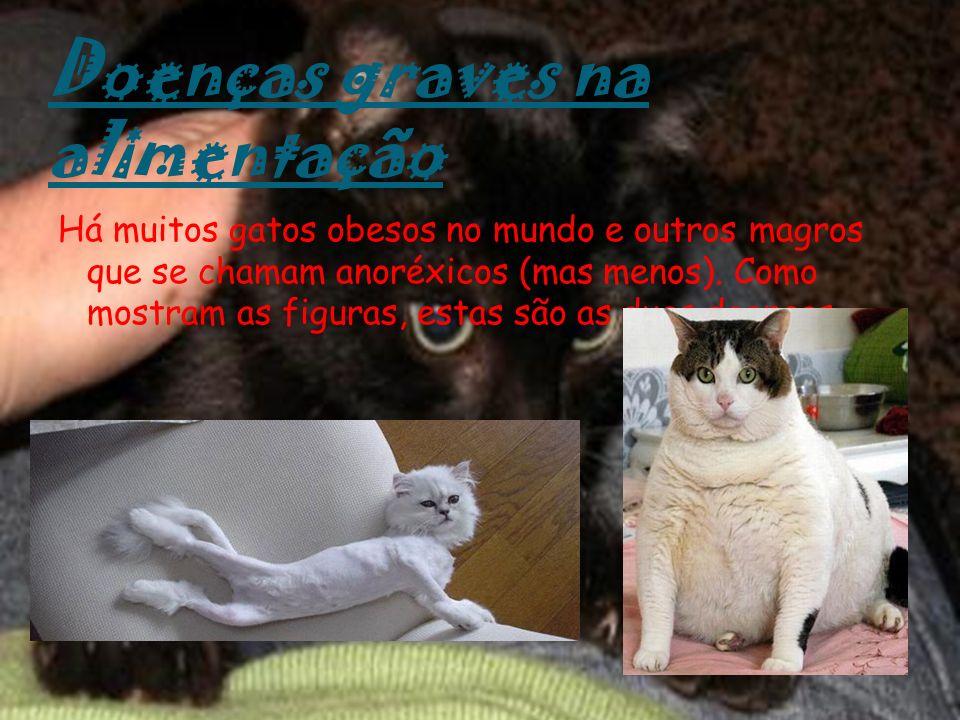 Doenças graves na alimentação Há muitos gatos obesos no mundo e outros magros que se chamam anoréxicos (mas menos). Como mostram as figuras, estas são