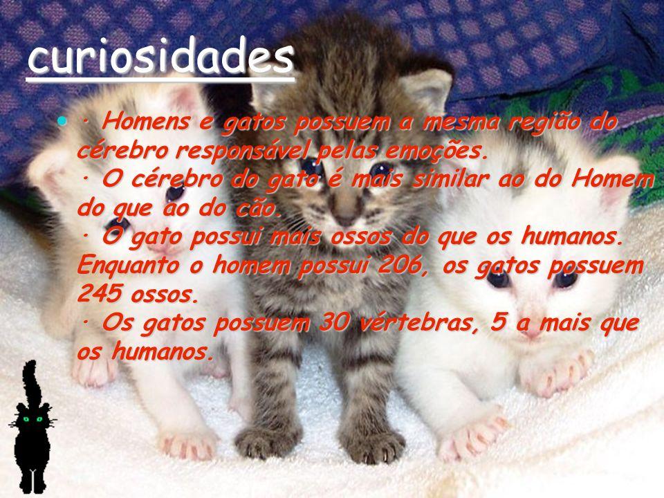 curiosidades · Homens e gatos possuem a mesma região do cérebro responsável pelas emoções. · O cérebro do gato é mais similar ao do Homem do que ao do