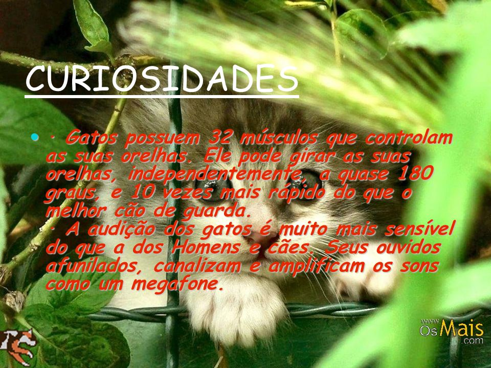 CURIOSIDADES · Gatos possuem 32 músculos que controlam as suas orelhas. Ele pode girar as suas orelhas, independentemente, a quase 180 graus, e 10 vez