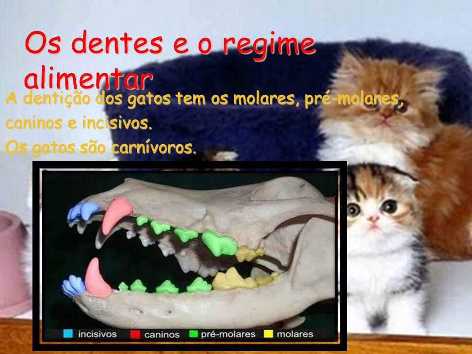 Os dentes e o regime alimentar A dentição dos gatos tem os molares, pré-molares, caninos e incisivos. Os gatos são carnívoros.