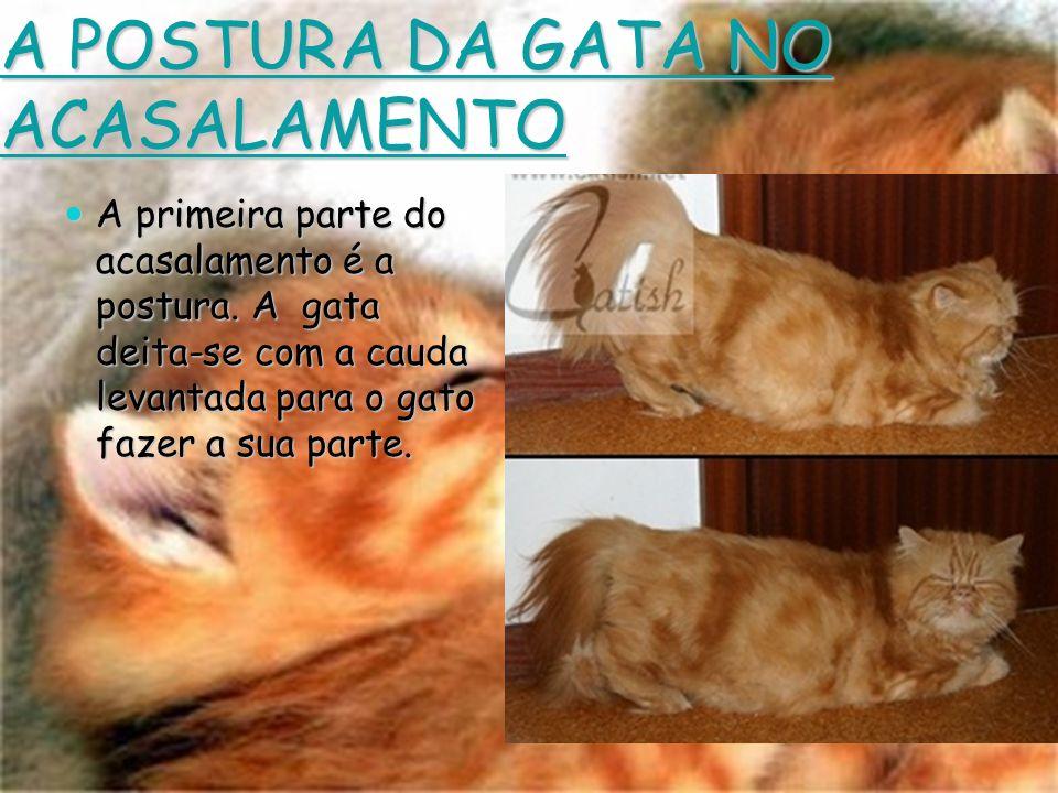A POSTURA DA GATA NO ACASALAMENTO A primeira parte do acasalamento é a postura. A gata deita-se com a cauda levantada para o gato fazer a sua parte.