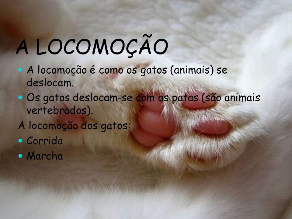 A LOCOMOÇÃO A locomoção é como os gatos (animais) se deslocam. Os gatos deslocam-se com as patas (são animais vertebrados). A locomoção dos gatos: Cor