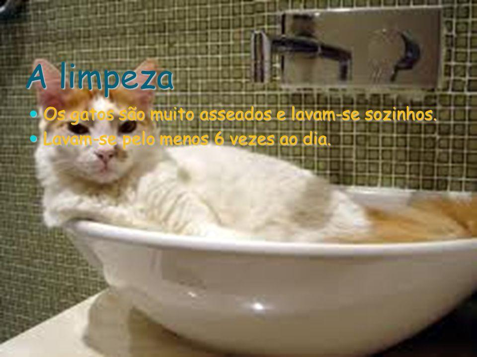 A limpeza Os gatos são muito asseados e lavam-se sozinhos. Os gatos são muito asseados e lavam-se sozinhos. Lavam-se pelo menos 6 vezes ao dia. Lavam-