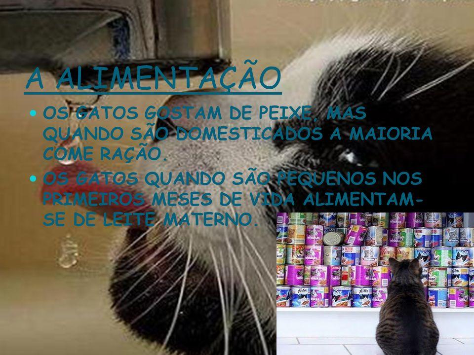 Forma e revestimento do corpo Forma e revestimento do corpo O revestimento dos gatos é pêlo.