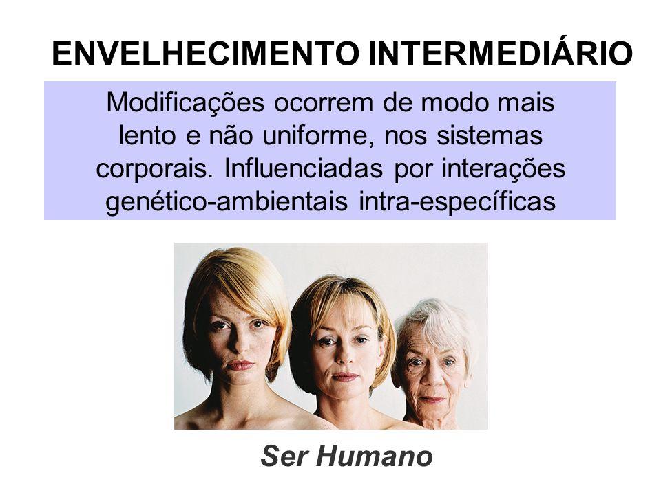 ENVELHECIMENTO INTERMEDIÁRIO Modificações ocorrem de modo mais lento e não uniforme, nos sistemas corporais. Influenciadas por interações genético-amb