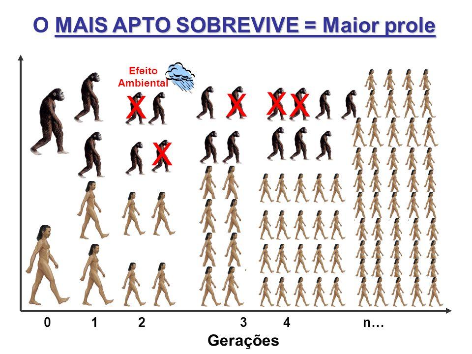 MAIS APTO SOBREVIVE = Maior prole O MAIS APTO SOBREVIVE = Maior prole Gerações 01 2 3 4 n… X X X X X Efeito Ambiental