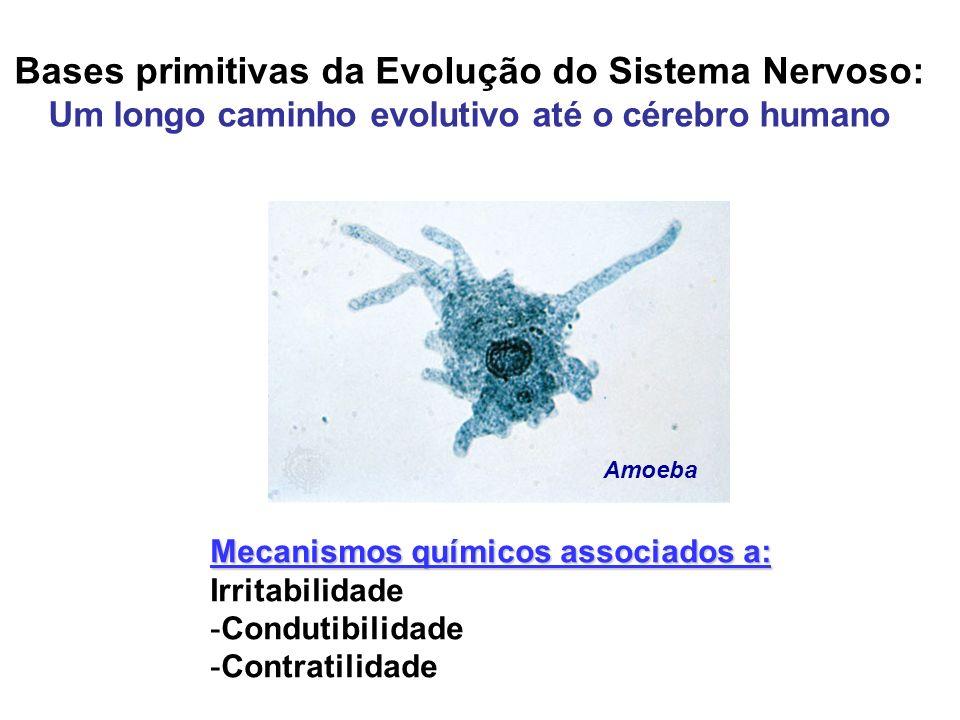 Bases primitivas da Evolução do Sistema Nervoso: Um longo caminho evolutivo até o cérebro humano Mecanismos químicos associados a: Irritabilidade -Con