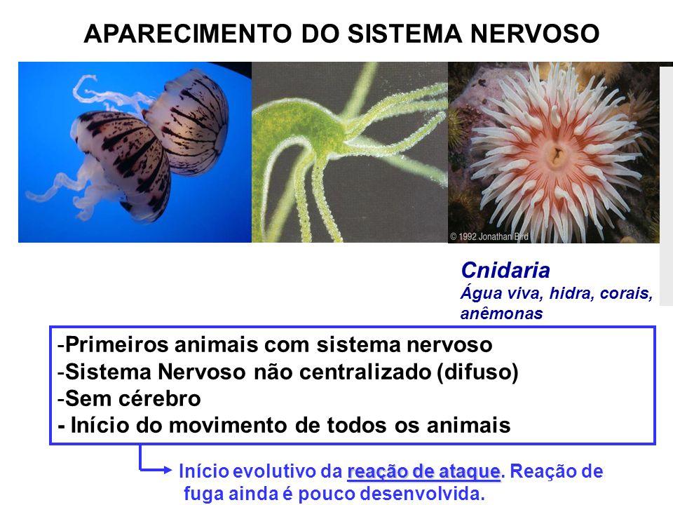 APARECIMENTO DO SISTEMA NERVOSO -Primeiros animais com sistema nervoso -Sistema Nervoso não centralizado (difuso) -Sem cérebro - Início do movimento d