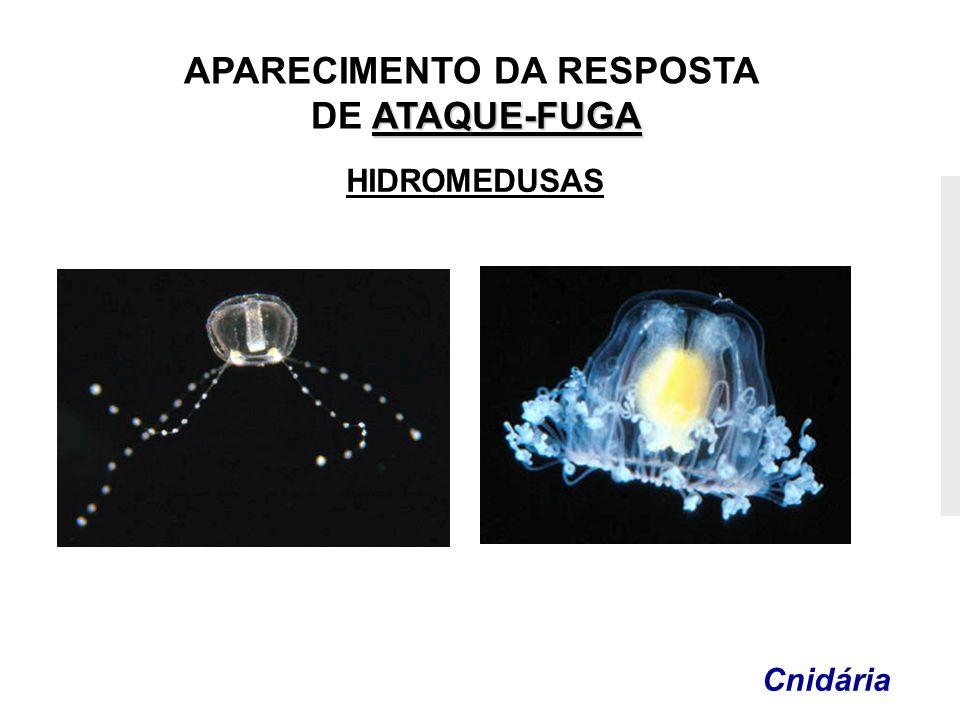 APARECIMENTO DA RESPOSTA ATAQUE-FUGA DE ATAQUE-FUGA Cnidária HIDROMEDUSAS