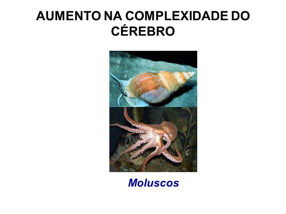 AUMENTO NA COMPLEXIDADE DO CÉREBRO Moluscos