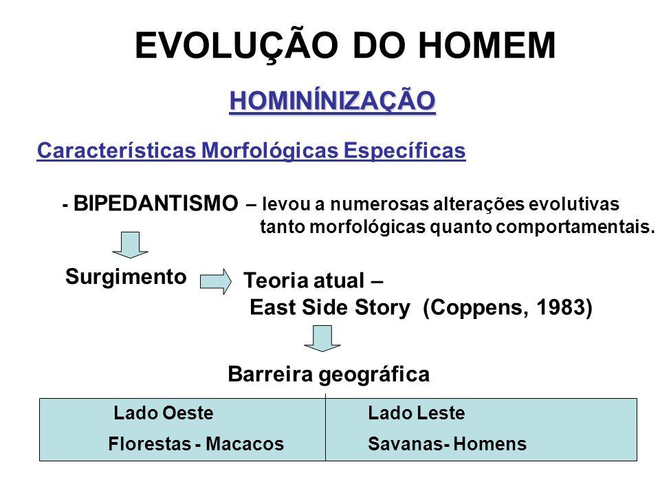 EVOLUÇÃO DO HOMEM HOMINÍNIZAÇÃO Características Morfológicas Específicas - BIPEDANTISMO – levou a numerosas alterações evolutivas tanto morfológicas q