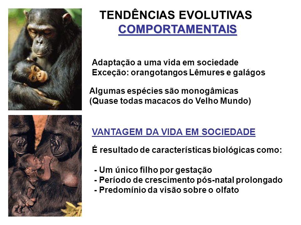 TENDÊNCIAS EVOLUTIVASCOMPORTAMENTAIS Adaptação a uma vida em sociedade Exceção: orangotangos Lêmures e galágos Algumas espécies são monogâmicas (Quase