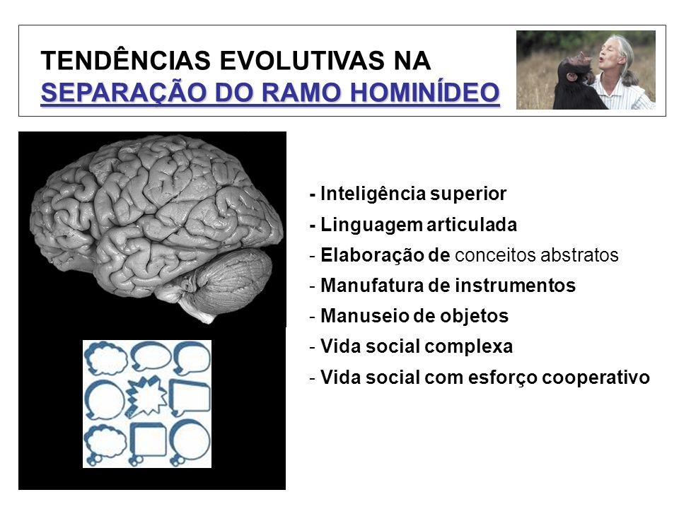 TENDÊNCIAS EVOLUTIVAS NA SEPARAÇÃO DO RAMO HOMINÍDEO - Inteligência superior - Linguagem articulada - Elaboração de conceitos abstratos - Manufatura d