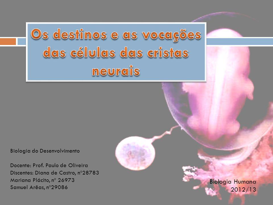 Biologia do Desenvolvimento Docente: Prof. Paulo de Oliveira Discentes: Diana de Castro, nº28783 Mariana Plácito, nº 26973 Samuel Arêas, nº29086 Biolo