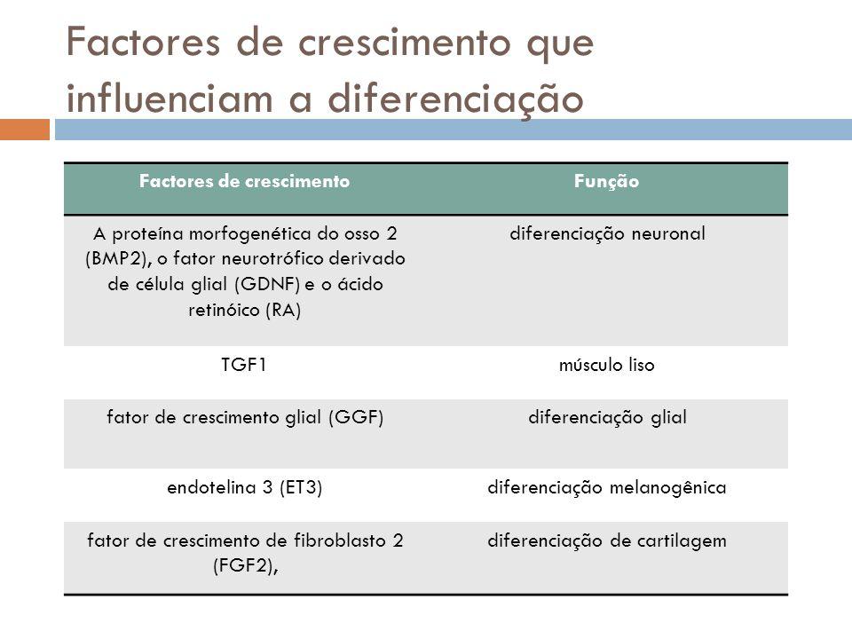 Factores de crescimento que influenciam a diferenciação Factores de crescimentoFunção A proteína morfogenética do osso 2 (BMP2), o fator neurotrófico