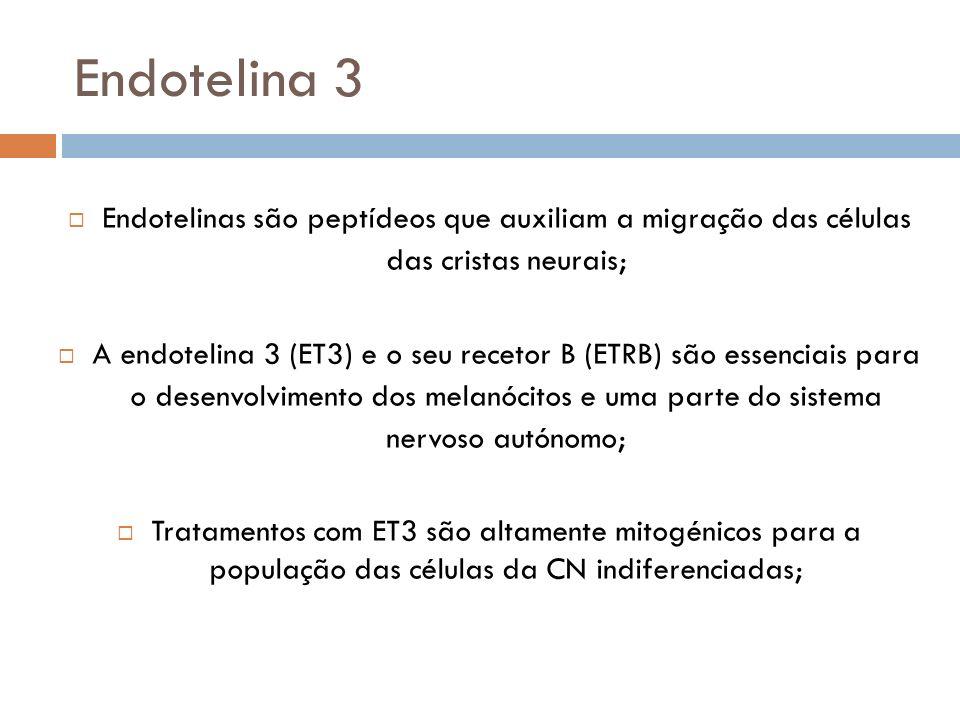 Endotelina 3 Endotelinas são peptídeos que auxiliam a migração das células das cristas neurais; A endotelina 3 (ET3) e o seu recetor B (ETRB) são esse