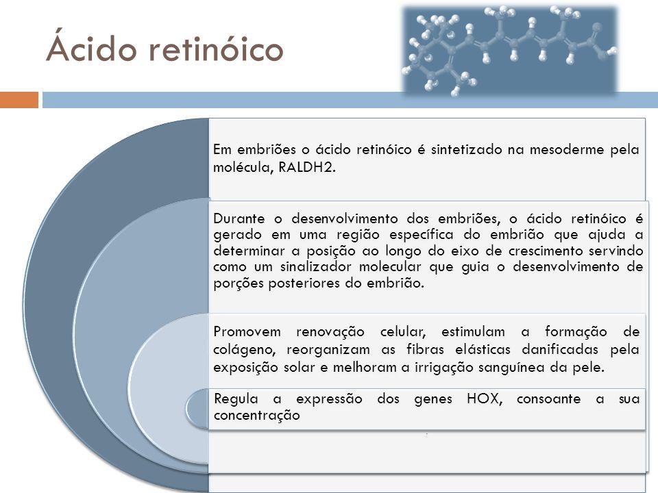Ácido retinóico Em embriões o ácido retinóico é sintetizado na mesoderme pela molécula, RALDH2. Durante o desenvolvimento dos embriões, o ácido retinó